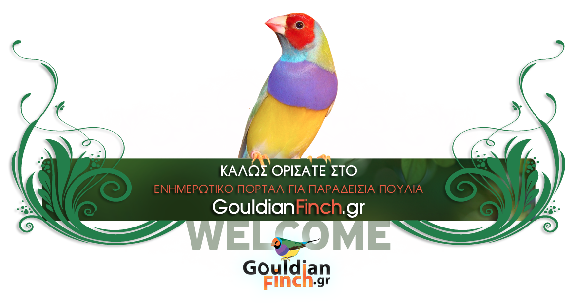gouldian exotic εξωτικά παραδείσια πουλιά owl bengalese java star cordon